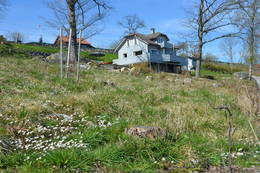 Kvitveisen blomstrer i mai - Foto: Njål Vadla