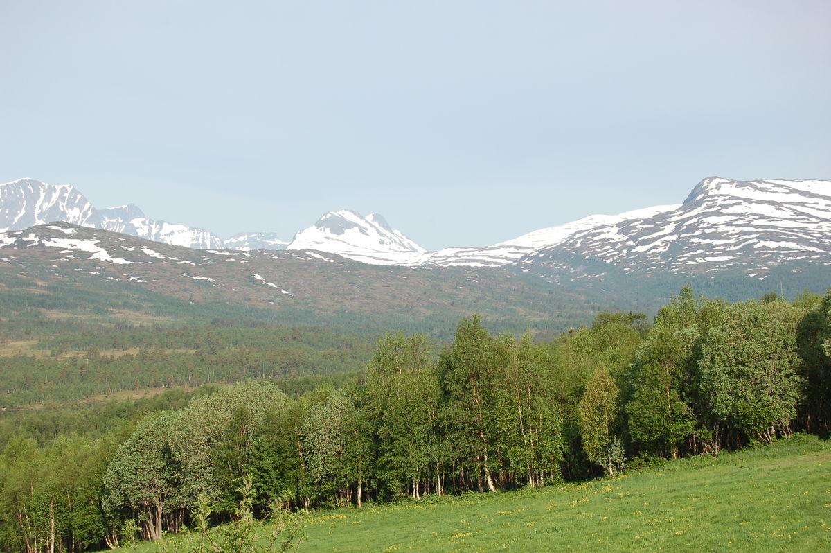 Utsikt fra Bårdsgarden