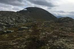Utsikt mot Høgenipa  - Foto: Anne Cecilie Kapstad