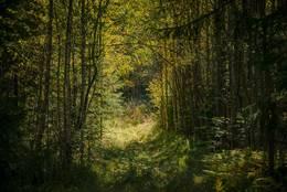 Steindalsveien - Foto: Øystein Berntsen