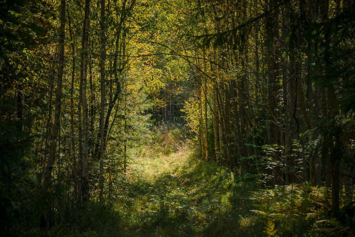 Steindalsveien