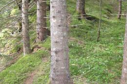 Stien opp til Sætersetra - Foto: Erik Gudmundsen