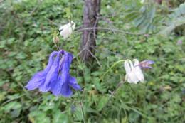 Flora i Bremsåsen naturreservat - Foto: Anne Gallefos Wollertsen