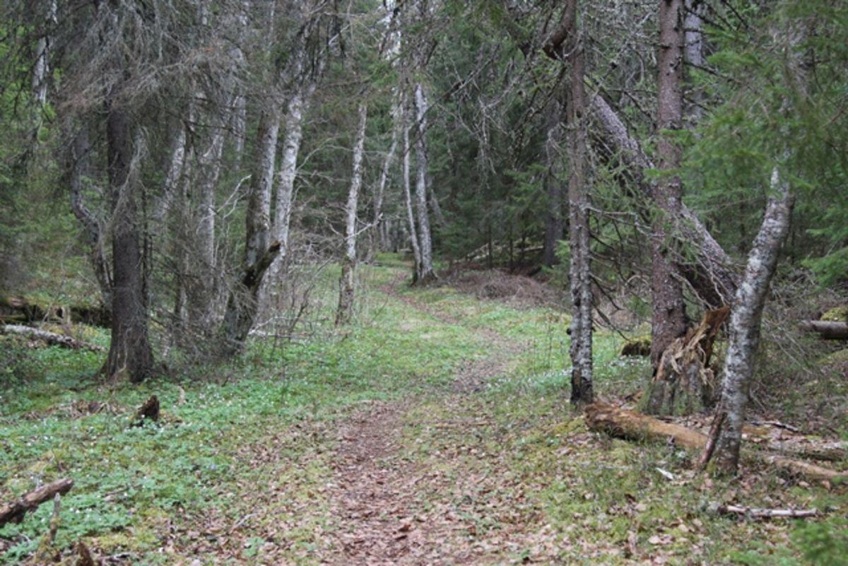 Inne i skogen