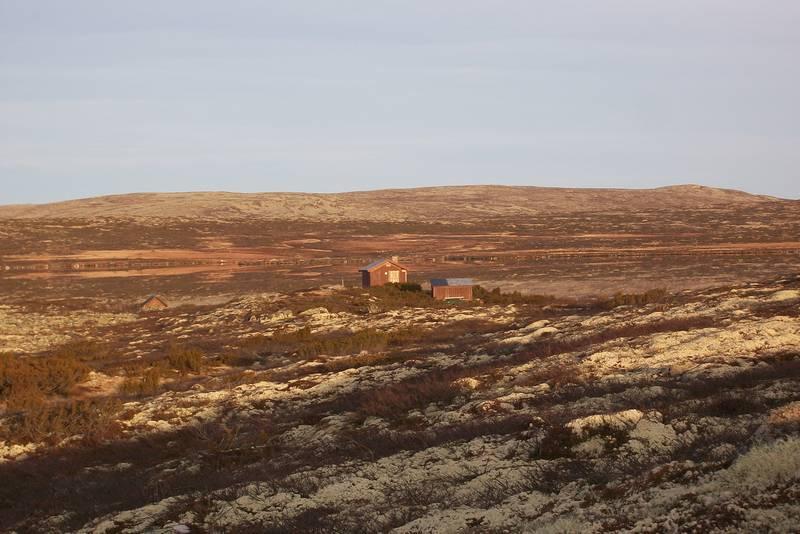 Lyngbua i høstfjellet , 8.11.2011
