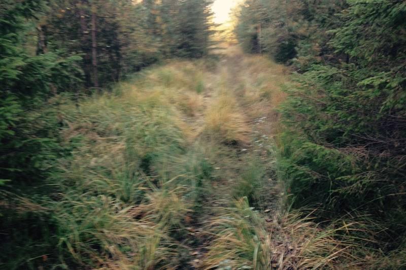 Fin skogsvei å følge etter Støletjønn hele veien tilbake til Heptekjerr