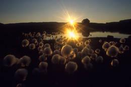 Myrull ved Skavlabu - Foto: Ukjent