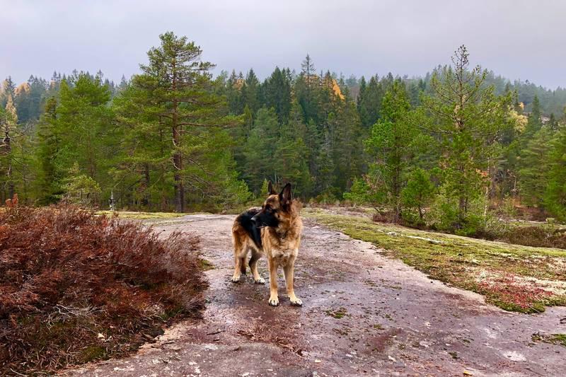 Landskapet sett i retning mot Blåfjell