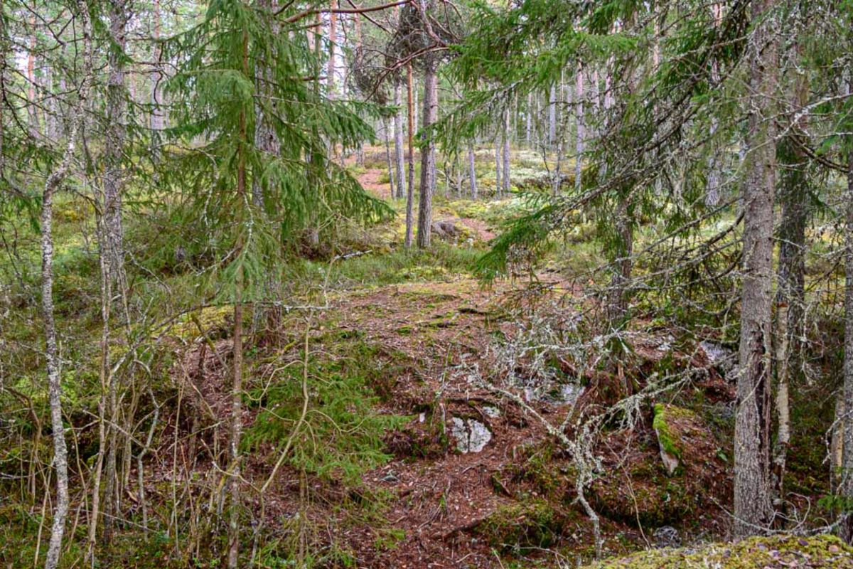 Stien går gjennom skogen