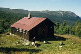 Storekrakkoia - Foto: Per Roger Lauritzen