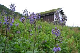 Sommeren er nydelig i Stølsmaradalen  - Foto: Knut Brandrud