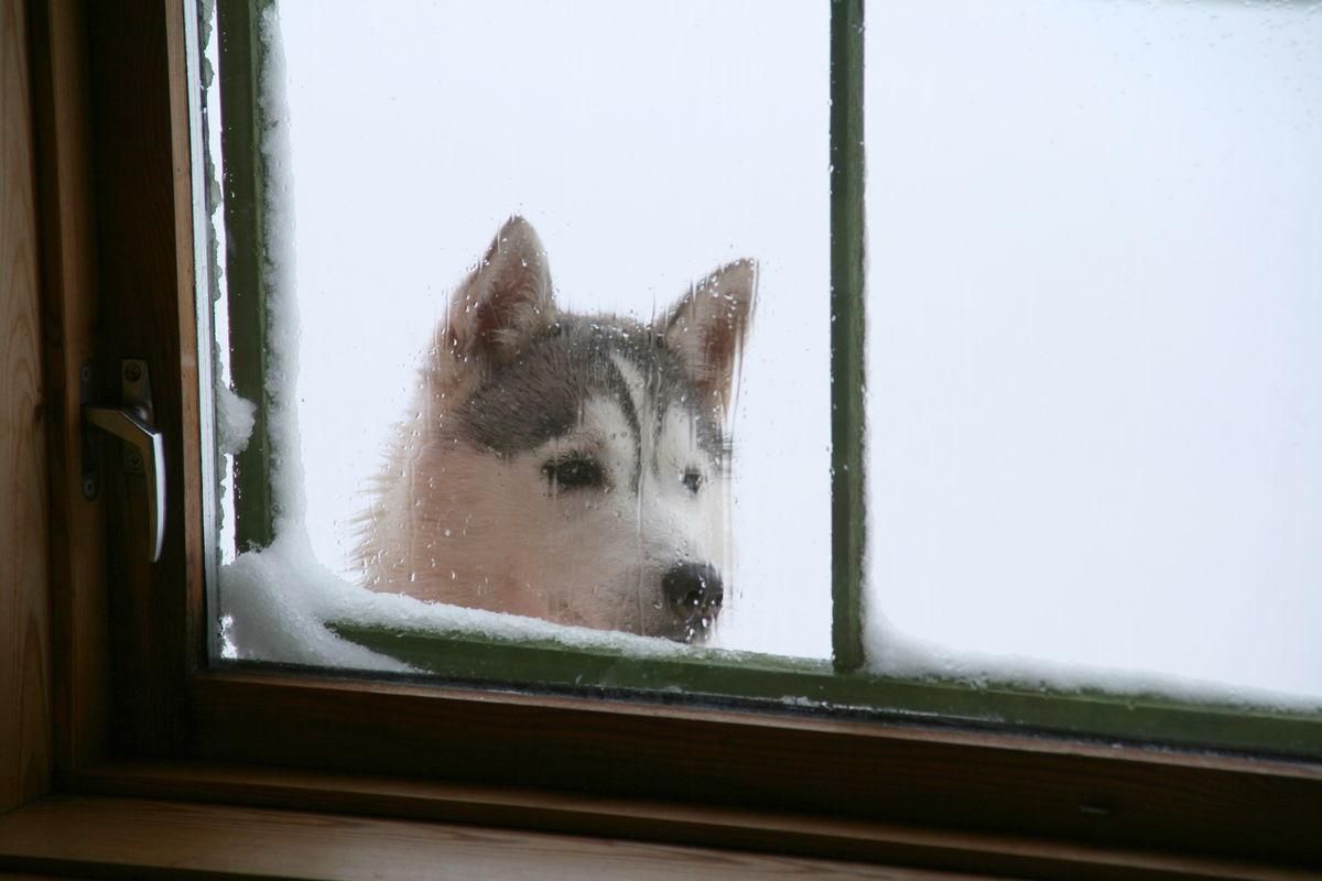 """""""Er det noe godt til middag?"""" Eget hunderom i uthuset for hund."""