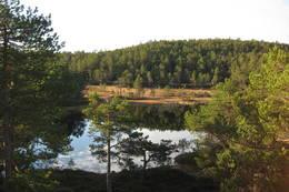 Igeltjønna - Foto: NTT