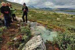 I Alvdal Vestfjell er det mange friske grunnvannskilder - Foto: Are Ladegård