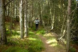 Stien ut går delvis gjennom skog (mai03). - Foto: J.A.Holm