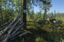 Nisteplass ved Marteplassen  - Foto: Ane Killingstad