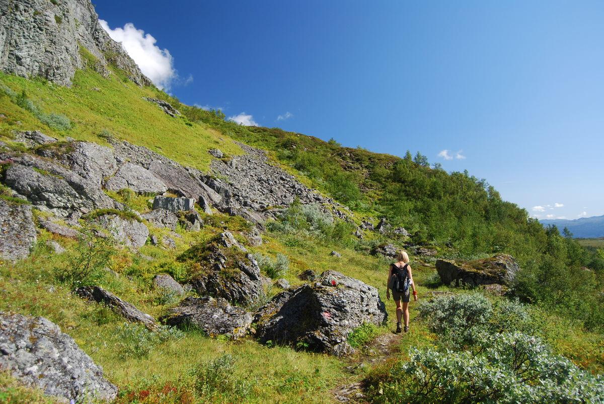 Turen går i et frodig og vakkert høyfjellsterreng.