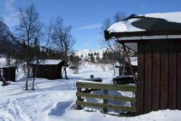Granbustøyl - Foto: Kjell Sandåker