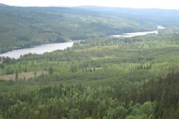 Utsikt fra Maliskjæra sørover Ritnadalen på Grue Finnskog. - Foto: Stein  Briskerud