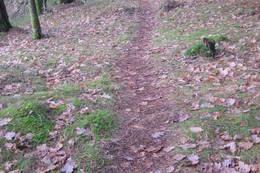Stien er godt ryddet og er myk og behagelig de fleste steder. - Foto: Floke Bredland