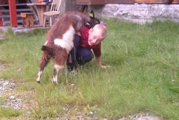 Det går geiter på Bjørnhollia gjennom sommeren - Foto: Ukjent