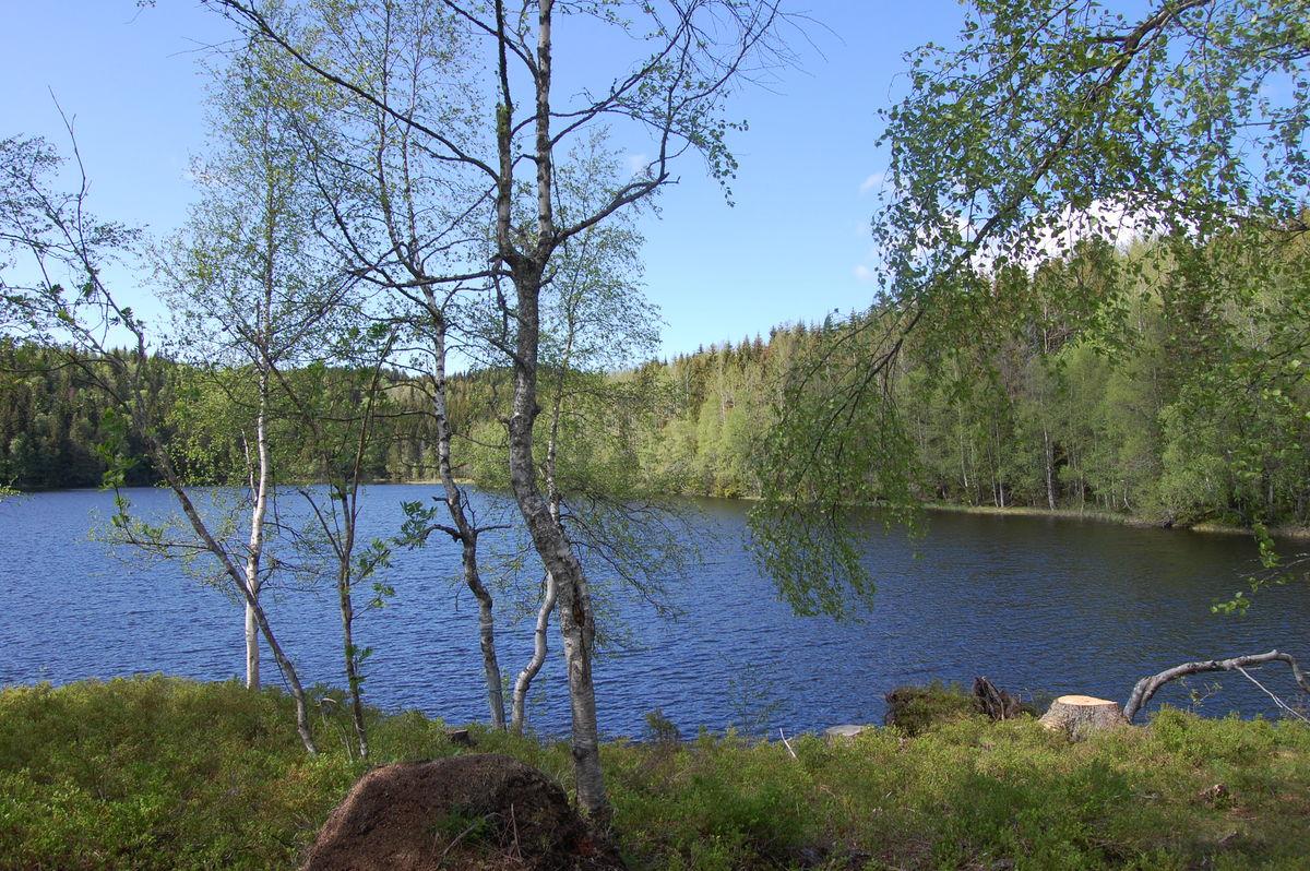 Flott utsikt over vannet fra Svartvannshytta