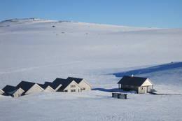 Hvite vidder ved Halne  -  Foto: olav moss