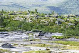 Vadestedet - Foto: Kjell Fredriksen