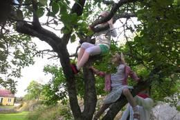 Barn liker å klatre i trær. Det kan trygt gjøres her like forand hovedhytta. De kan også klatre i fjell flere steder på eiendommen som er 7 mål.  - Foto: Frank-Werner Unsgaard