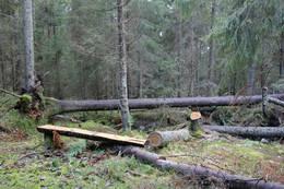 Mulighet for pust i bakken underveis - Foto: Tor-Arne Paulsen