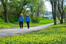Vårstemning og blomstring på fin grusvei ved Sverd i fjell. -  Foto: John Petter Nordbø