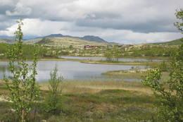 Sølnkletten i Alvadal Vestfjell - Foto: Hilde Holmboe Lian