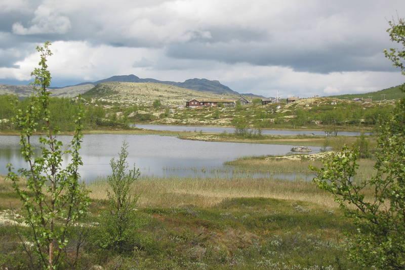Sølnkletten i Alvadal Vestfjell