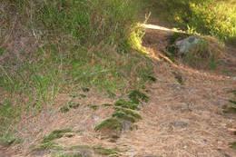 Stien går forbi blåbærlyng - Foto: Ukjent