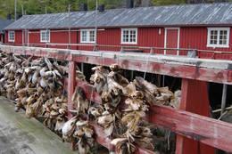 Tørrfisk i Nusfjord. Foto: Kristin Baune Bochud -  Foto: Kristin Baune Bochud