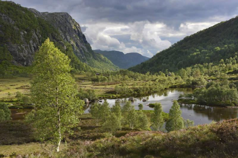 Utsikt fra Støle mot Kvitladalen