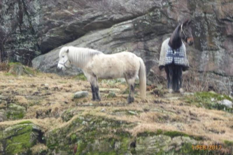 Hester på Søgne