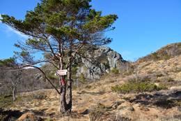 På tide å vende nasa mot vest, Husafjellet i bakgrunnen - Foto: Roald Årvik