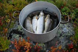 Fisk er det bra med i Ulvådalsvatnet - Foto: Harald Tryggestad