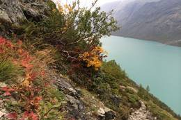 Fargerik flora - Foto: Linda Lyby