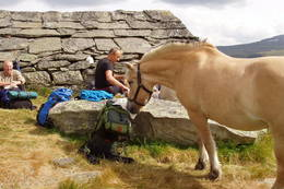 Det hender man treffer hester på beite på Vidda, og de er ganske sosiale. - Foto: Anne-Kari Enes