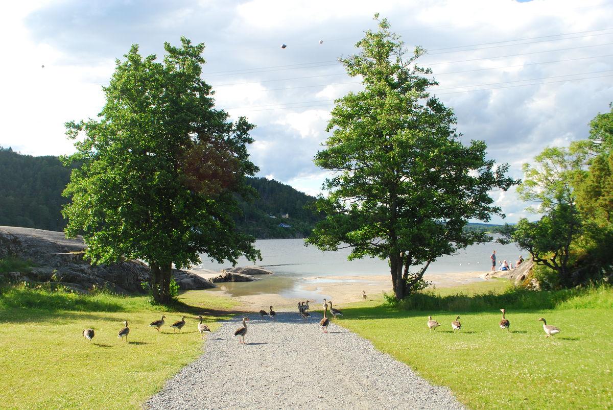 Det er en liten badestrand rett nedenfor Breivoll Gård.