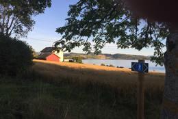 Langs stien - Foto: Kathrine Kragøe Skjelvan