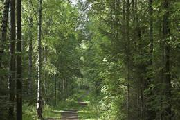 Stien følger deler av lysløypa gjennom Hortenskogen - Foto: Ukjent