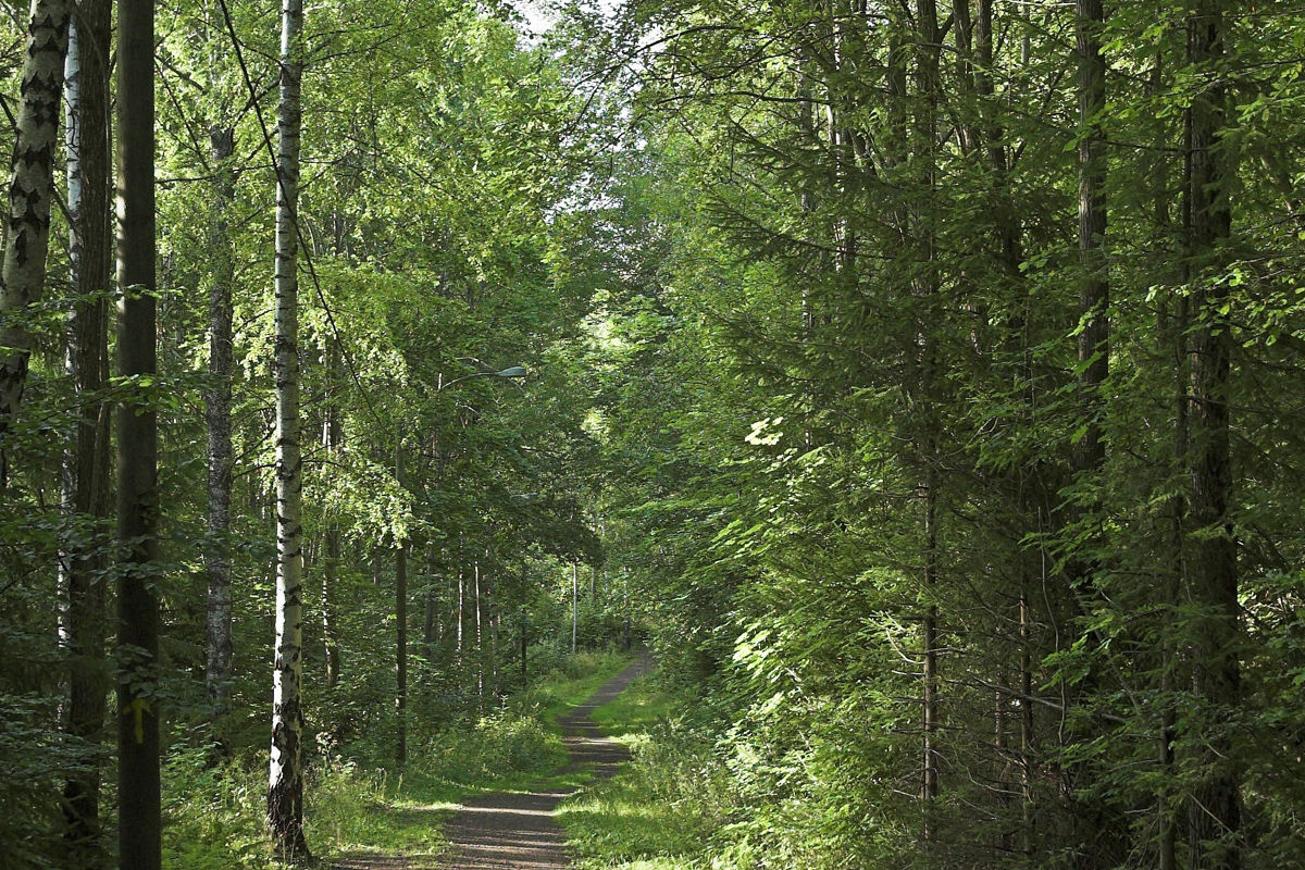 Stien følger deler av lysløypa gjennom Hortenskogen