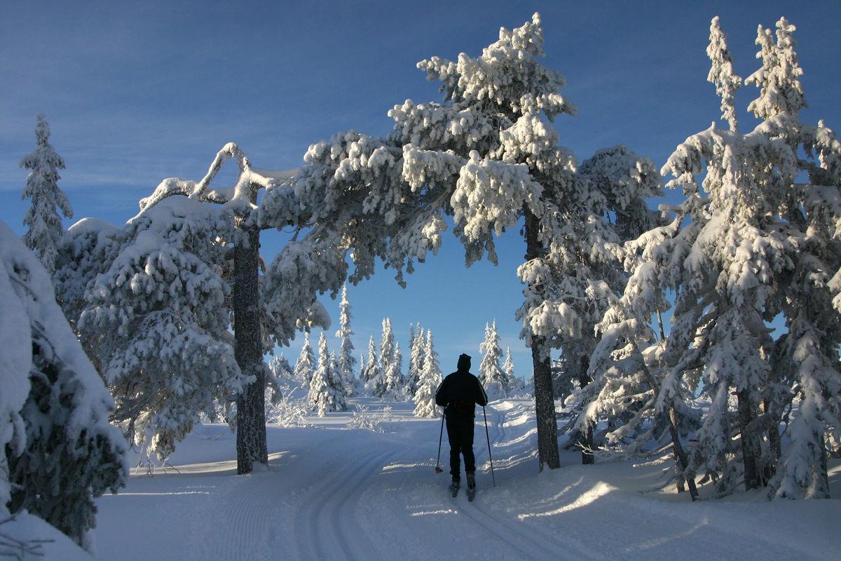 Fra tjern og skog til vidde og fjell - Hedmarksvidda er et snilt område med turmuligheter for alle