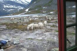Trivelig selskap rundt Tjønnebu - Foto: J. A. Skogtrø
