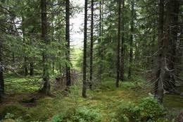 Spennende skog underveis - Foto: Ingunn Holm © Riksantikvaren