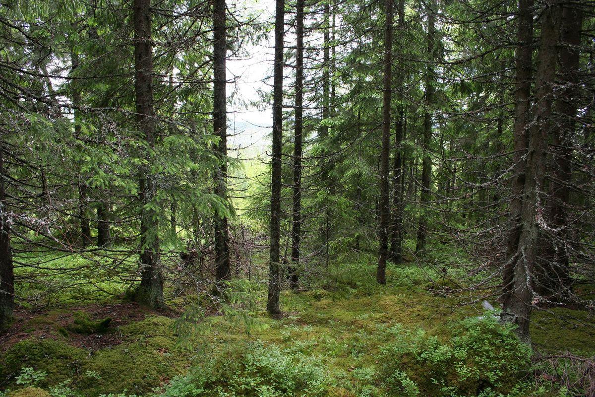 Spennende skog underveis