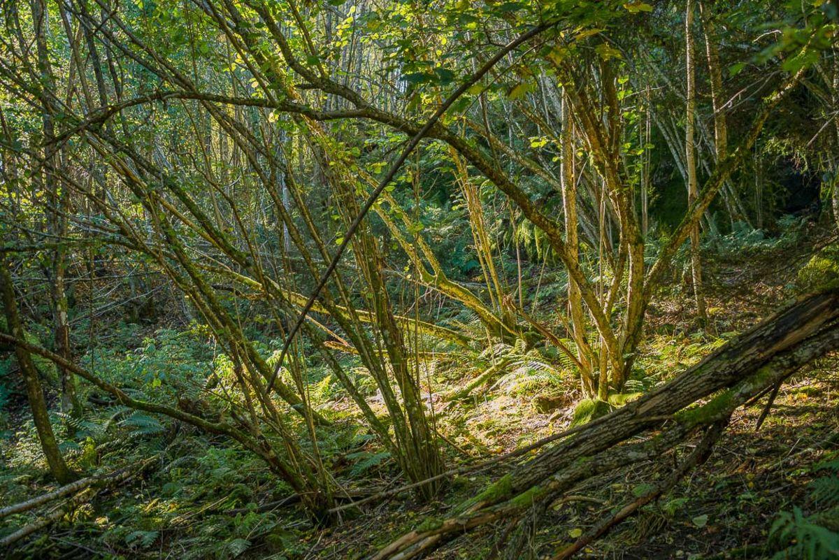 Tett skog i Steindalen